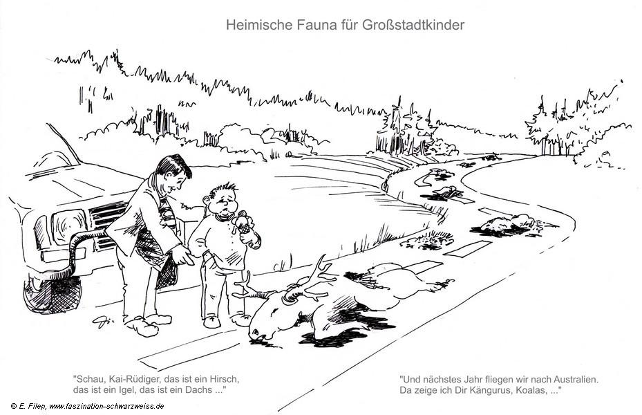 Heimische Fauna - Evelyn Filep
